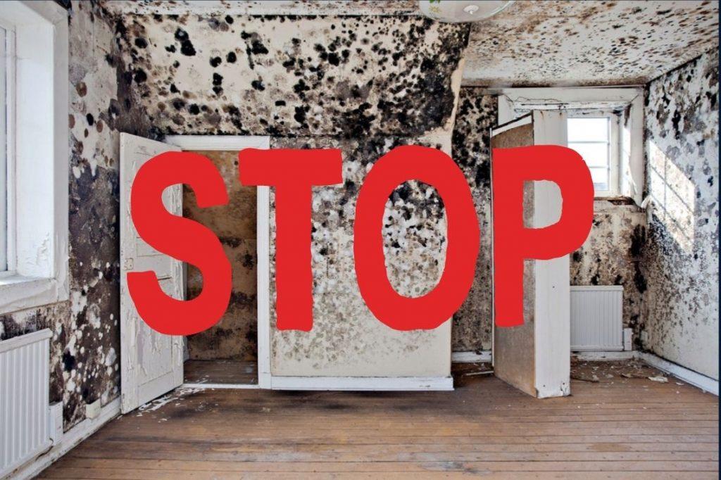 penészes fal, Mit okoz a penészes fal a lakásomban