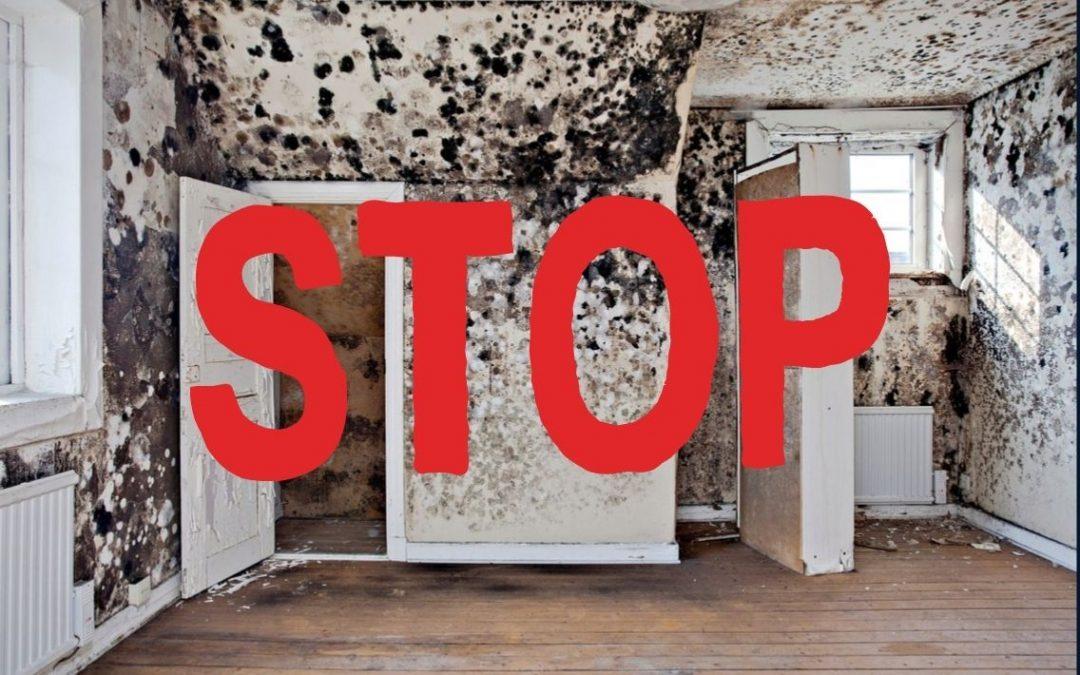 Mit okoz a penészes fal a lakásomban